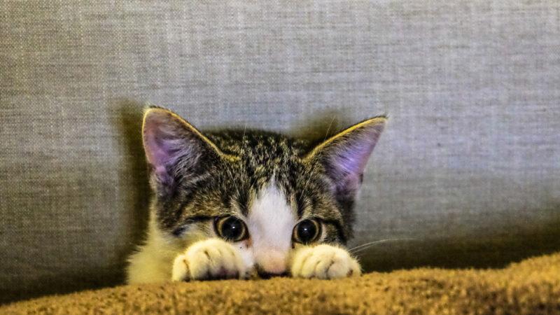 Gatocán necesita voluntariado para seguimientos