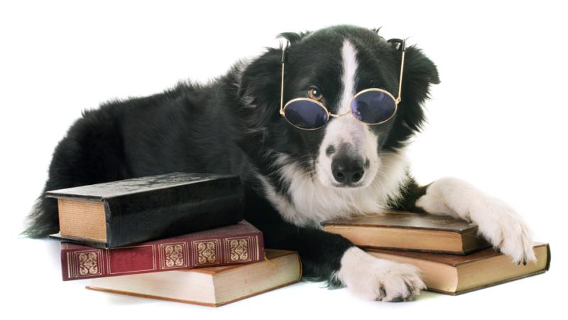 La RAE incluye los términos «animalismo» y «animalista» en el diccionario