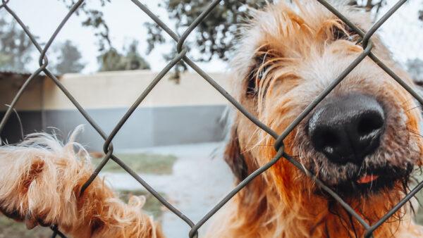 ¿Cuáles son los canales legales para adquirir un animal de compañía en Galicia?