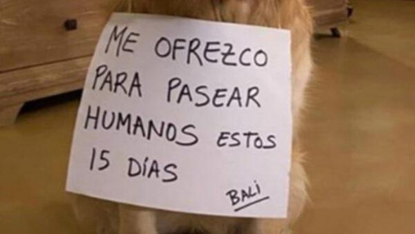 Alquiler de perros: grave incumplimiento de las normas del Estado de Alarma y de la Ley de Bienestar Animal