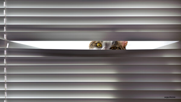 Ansiedad por separación en perros y gatos después de las vacaciones