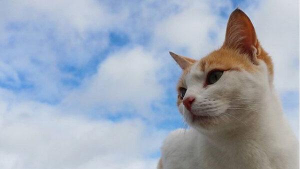 Convivencia con las colonias felinas de la ciudad