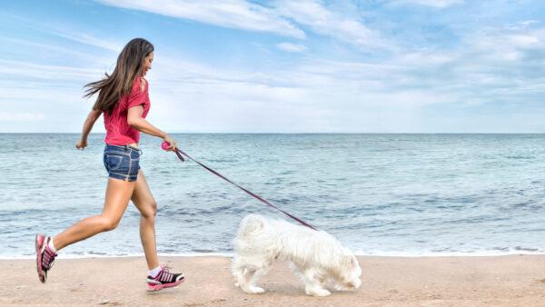 Confirmado ¡Podemos pasear y hacer deporte en la playa con nuestros perros!