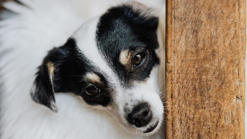 Consulta pública previa acerca del Anteproyecto de Ley de Bienestar Animal