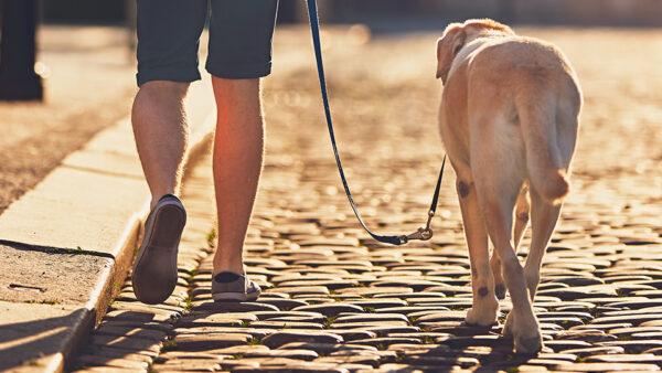 La Concejalía de Medio Ambiente aprueba las normas sobre mascotas y colonias felinas de aplicación durante el estado de alarma
