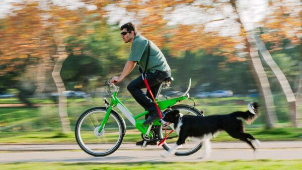 ¡Ya podemos salir a pasear y hacer deporte con nuestros perros!