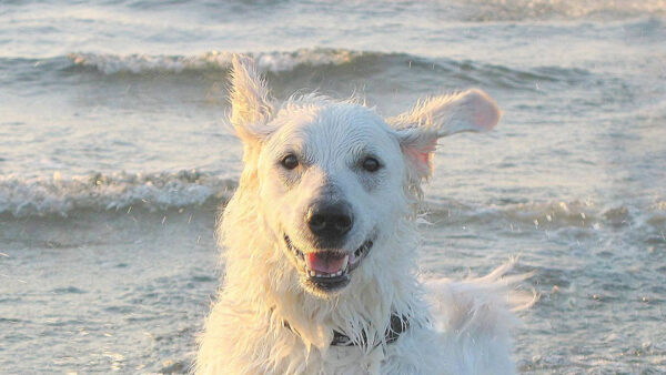 ¿Cómo disfrutar con tu perro en la playa? Evita riesgos