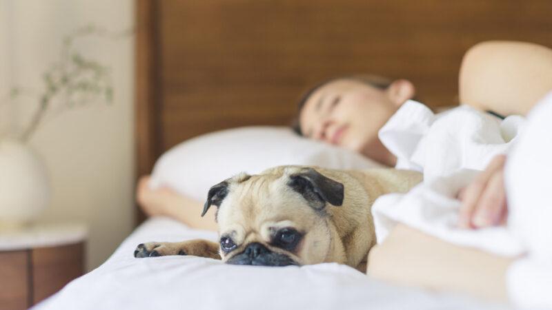 «Su perro será bienvenido en el hotel. Y si él se hace responsable de usted, también a usted lo recibiremos con mucho gusto»