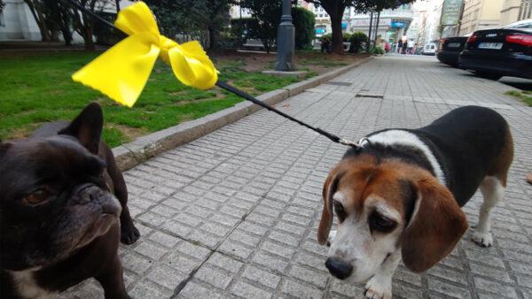 La importancia del lazo amarillo