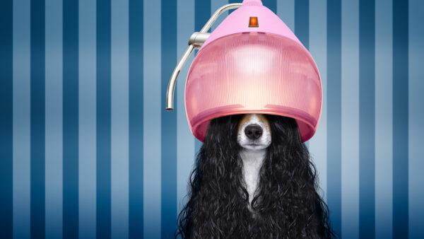 ¿Has pedido cita ya? Las peluquerías caninas comienzan su actividad con largas listas de espera