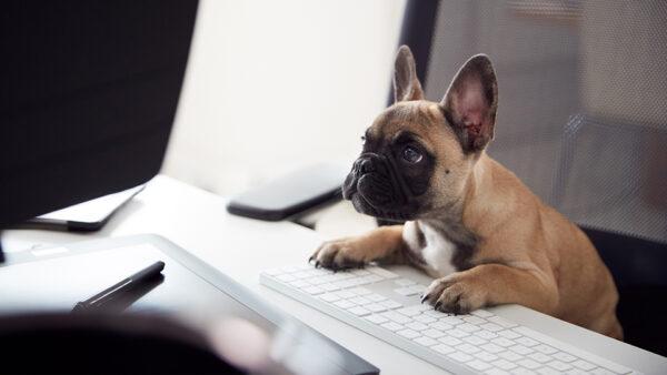 Noticias coronavirus y nuestras mascotas