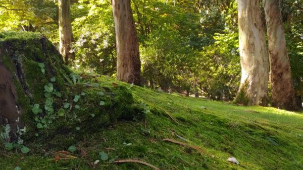 La Concejalía de Medio Ambiente recuerda que los parques no son lugares de ocio durante el Estado de Alarma