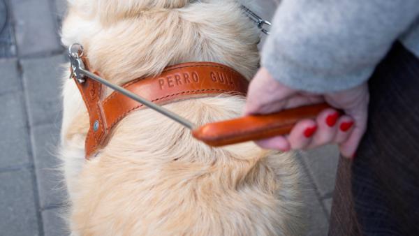 Ayuda a mantener la distancia de seguridad a los más de mil perros guía que permiten a las personas ciegas seguir siendo autónomas durante el estado de alarma