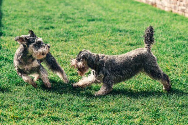 Los hoteles de mascotas, una buena opción para que los perros urbanitas disfruten durante el confinamiento