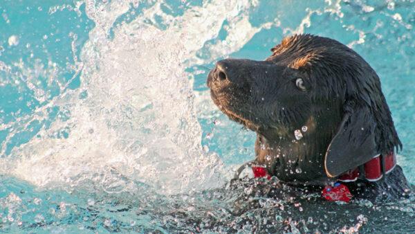 Evita riesgos ¡Enséñale a salir de la piscina!