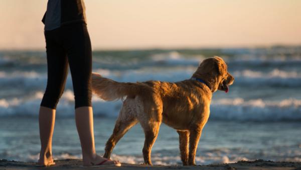 Con los perros en las playas de A Coruña durante la fase 2 de la desescalada