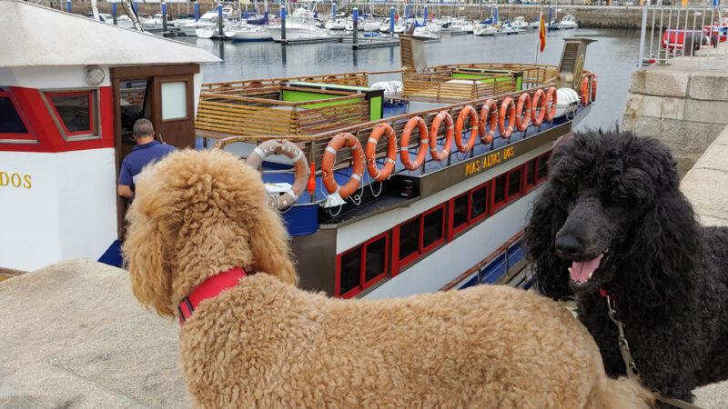 Crucero pet friendly por la bahía de A Coruña
