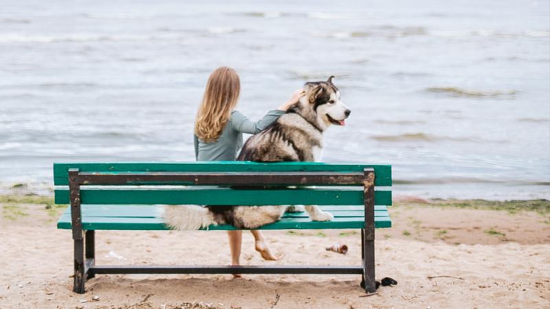 El Ayuntamiento rectifica: ya NO se puede ir a la playa con los perros
