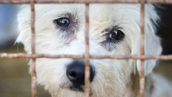 El registro nacional de animales de compañía más cerca de convertirse en realidad