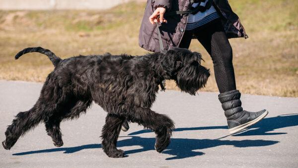 Sacar al perro para cubrir sus necesidades fisiológicas, no a pasear