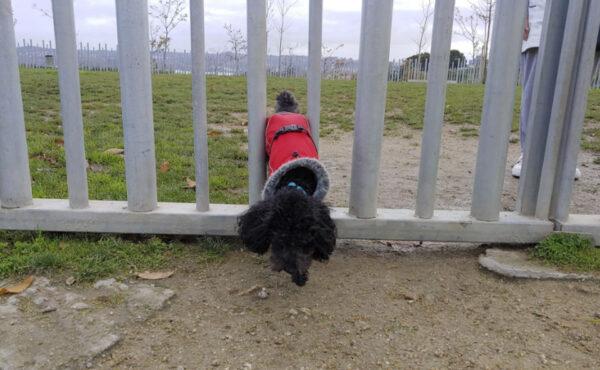 El área canina de Eirís no es segura para perros pequeños