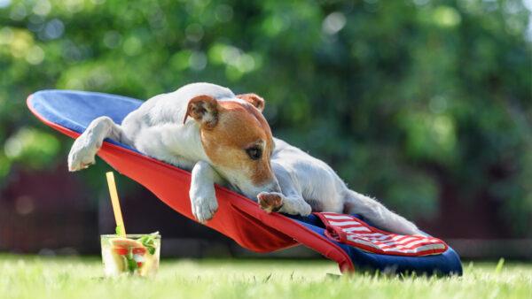 Los hoteles para mascotas considerados servicio esencial durante el estado de alarma