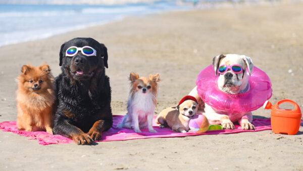 ¡Nuestros perros también quieren ir de vacaciones!